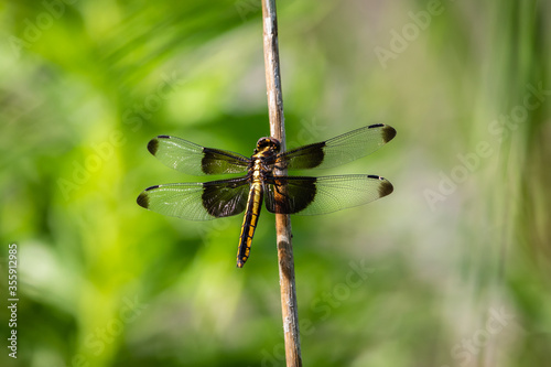 close up of a dragonfly Canvas Print