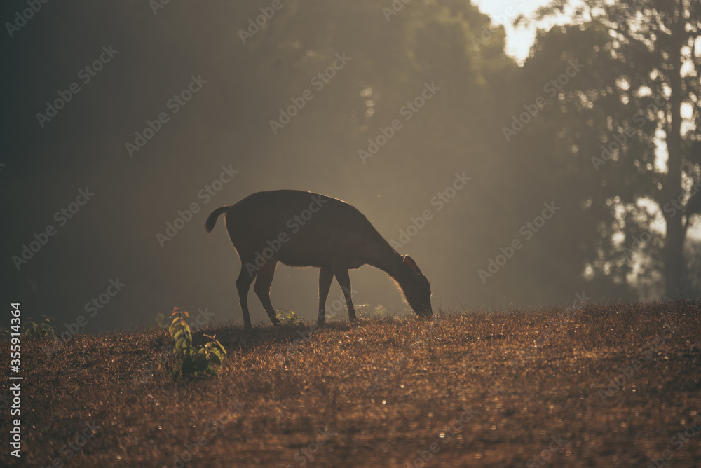 Fototapeta Nature in the morning tropical forest, That had wild deer grazing in the grass, A beautiful view from nature and an independent life for wildlife