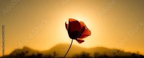 Flor de campo - 355937593