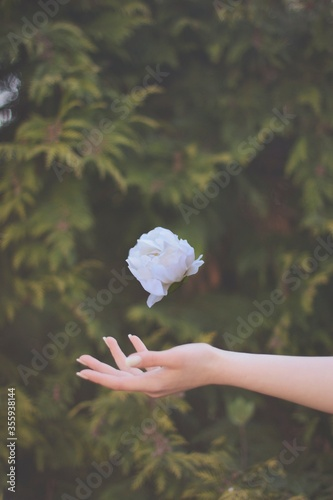 Obraz Latający kwiat  - fototapety do salonu