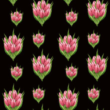 Bouquets Of Pink Tulips On A Black Background. Watercolor Hand Draw Illustration In The Form Of A Pattern For Printing On Fabric.