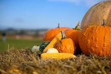 Pumpkins And Squashes In An Au...