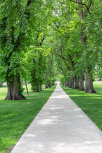 Beautiful Walkway Lined With T...
