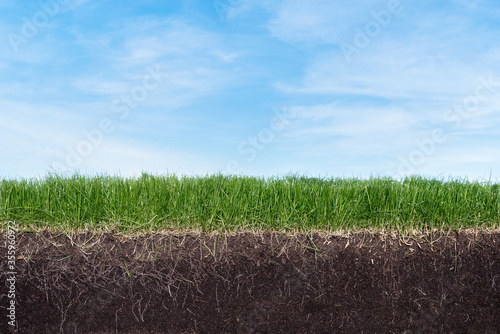 Fotografie, Obraz Green section of a grass with the soil and roots under blue sky