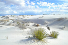White Sands National Park -- Scenic View With Yucca Plants In Foreground - With Sand Dunes & Cloudy Sky As Backdrop