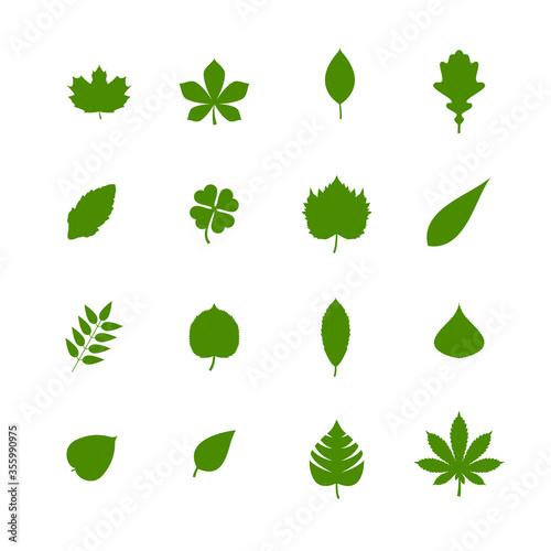 Fototapeta set of green leaves obraz na płótnie