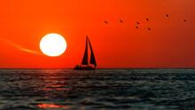 Sailboat Sunset Sailing Birds