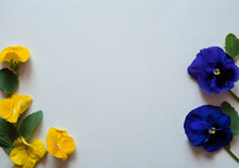 Flower Composition. Border Of Flowers And Leaves Of Pansies In Blue And Yellow On A Pastel Gray Background. Free Space.