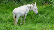 Bello Burro De Color Blanco En...
