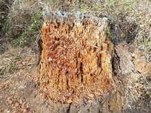 Rotting Or Decomposing Brown T...