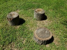 Three Tree Stumps And Shadows And Green Grass