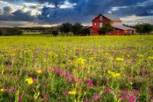 Wildflowers Near San Antonio, ...