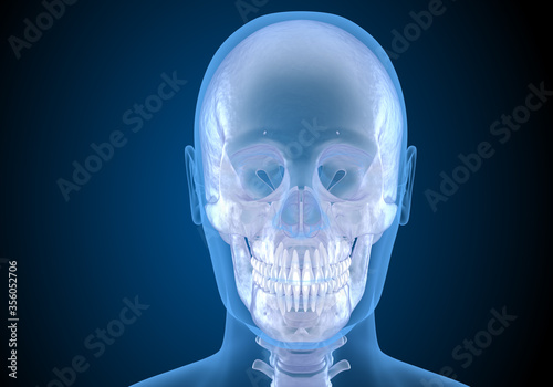 Photo Human head in xray view. Medically accurate 3D illustration