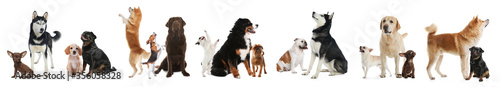 Fotografia, Obraz Collage with different dogs on white background. Banner design