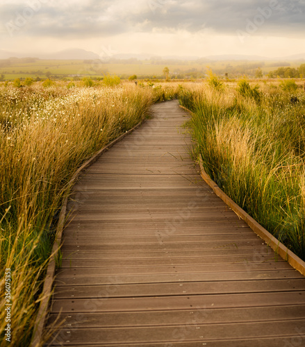 Fototapeta path in the field - Flanders Moss Nature Reserve