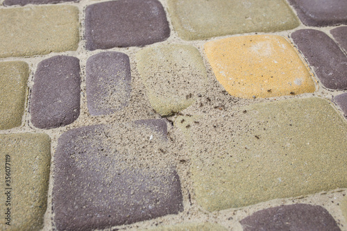 Obraz na plátne Pest ants on paving tiles dug a hole