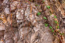 Closeup Of Dark Aged Shabby Cliff Cracks With Plant Roots And Leaves. Gray Stone Rock Texture Of Mountains. Concept Of Geology And Mountaineering