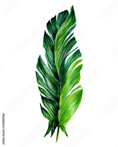 Obraz Single tropical leaf. Botanical watercolor illustrations of the jungle, floral elements. Exotic banana leaf isolated on white background. Beautiful illustration for textiles. - fototapety do salonu
