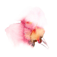 Red Single Flower. Watercolor ...