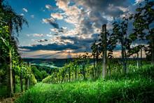 Weinbau 5