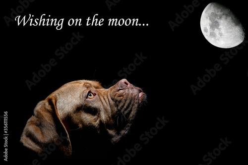 Valokuva Wishing on the Moon