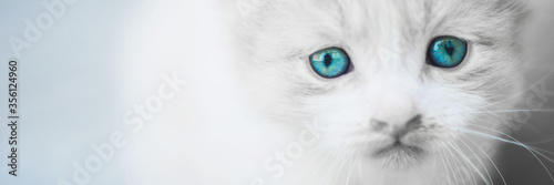 Photo Charming white fluffy kitten with blue eyes.