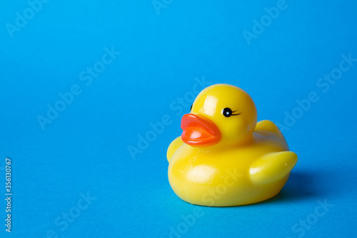 yellow rubber toy duck on blue background