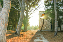 Pine Alley At Sunset In The Monastery Of Filerimos. Rhodes. Greece.
