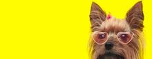 Adorable Yorkshire Terrier Dog...