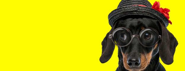 adorable teckel dachshund dog wearing glasses and hat