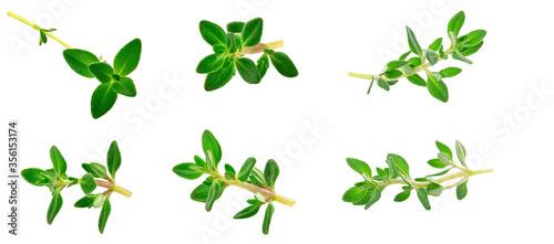 Fototapeta sprig of thyme isolated on white background obraz