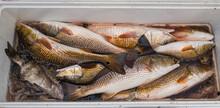 Fresh Catch Of Redfish And Bla...