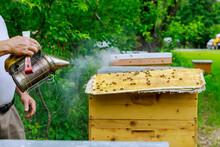Beekeeping Beekeeper Treats Th...