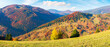 Leinwandbild Motiv mountainous countryside in autumn. landscape with forests in fall colours and grassy meadows in evening light. blue sky with puffy clouds. colorful nature scenery