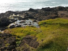 Green Grass And Tidepools And ...