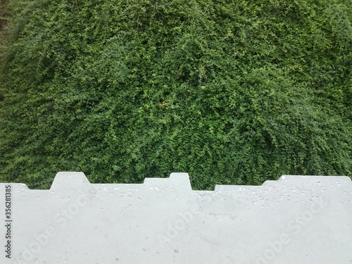 Photo green bushes with cement ledge