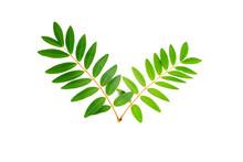 Cassia Siamea Leaf Isolated On...