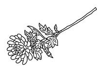 Vector Line Art Illustration O...