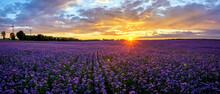 Beautiful Sunset Over A Field ...