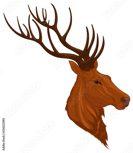Photo Head of a red deer with long antlers