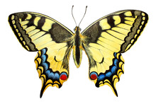 Swallowtail - Papilio Machaon Colorful  Butterfly Isolated On White Background. Performed By Watercolor And Colored Pencils.