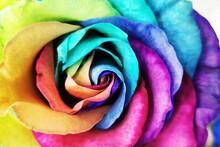 Rainbow Rose Flower Texture