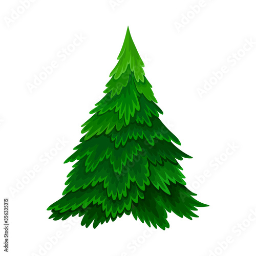 Pine or Fir Tree with Needle Leaves as Forest Element Vector Illustration Fototapeta