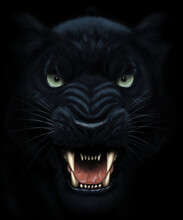 Panther Face Painting