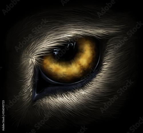 Fotografija Wolf eye