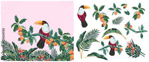 Photo set for design of tropical elements with exotic flowers, mango fruits on creepers, bird of paradise toucan