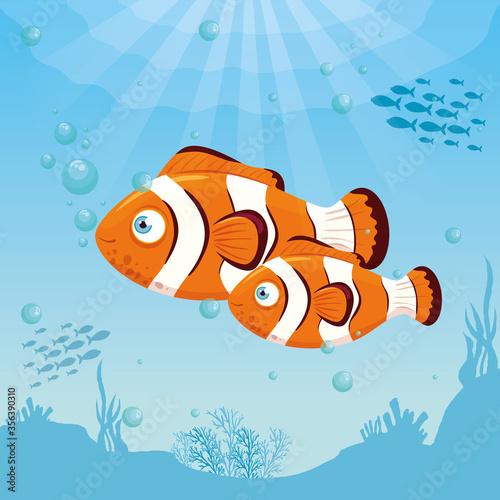 Fototapeta clownfish animals marine in ocean, sea world dwellers, cute underwater creatures