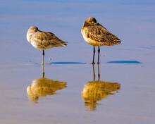Birds Sleeping On Beach In La Jolla California