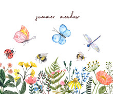Watercolor Summer Meadow Illus...