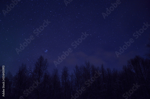 Fotografiet stars on winter night over birch trees